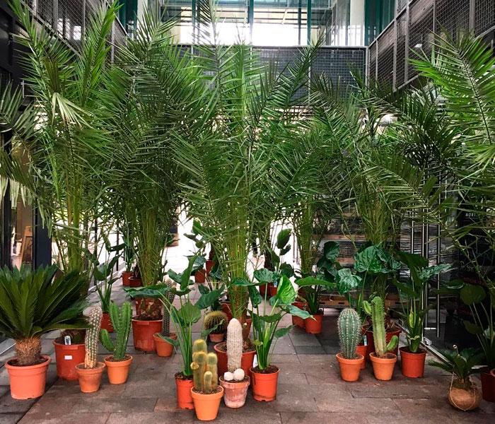 marche-central-planter